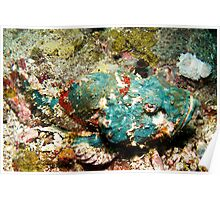 Blue Scorpionfish Poster