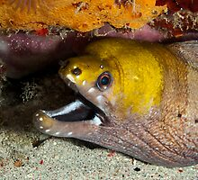 Moray Eel by Marcel Botman