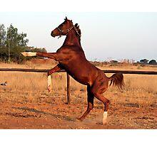 Wild Arabian Photographic Print