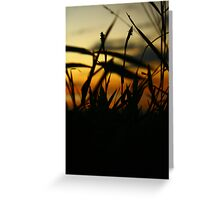 Sunset collections Greeting Card