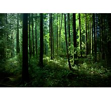 Pan's Grove Photographic Print
