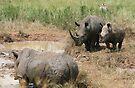 Rhinoceros family by zumi