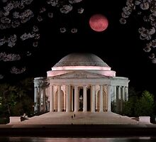 Cherry Blossom Moon by Matsumoto