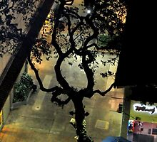 Lonely Tree at Night by kenspics