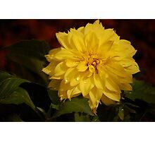 Spring Planting Photographic Print