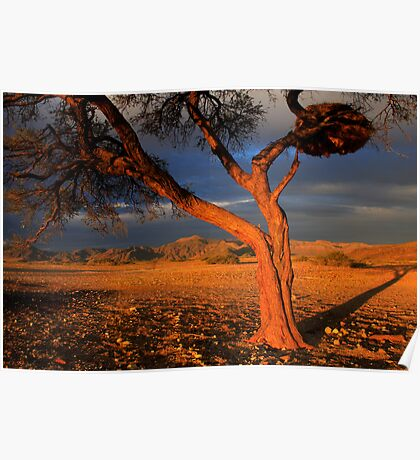 Tree and Weaver Bird Nest, Namib Desert, Namibia. Africa. Poster