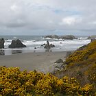 Bandon in Yellow by Thundercatt99