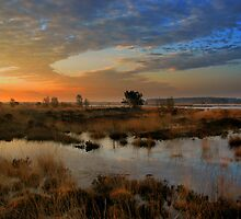 Morning Sky in the Wetlands by ienemien