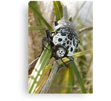 Black and White Beetle Canvas Print