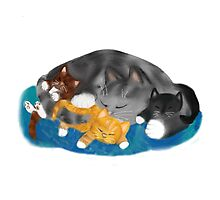 Three Kittens on Momma have a Cat Nap Photographic Print