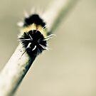 Moth by Jen Wahl
