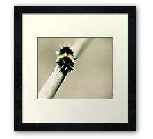 yellow spotted tiger moth Framed Print