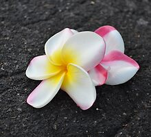 Frangipani on lava by beachykeen