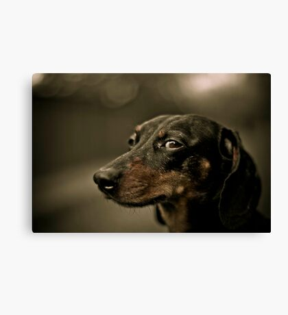 Sly eye Canvas Print