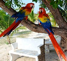 Macaws by thartranft