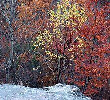 Autumn Trees by Helena Haidner
