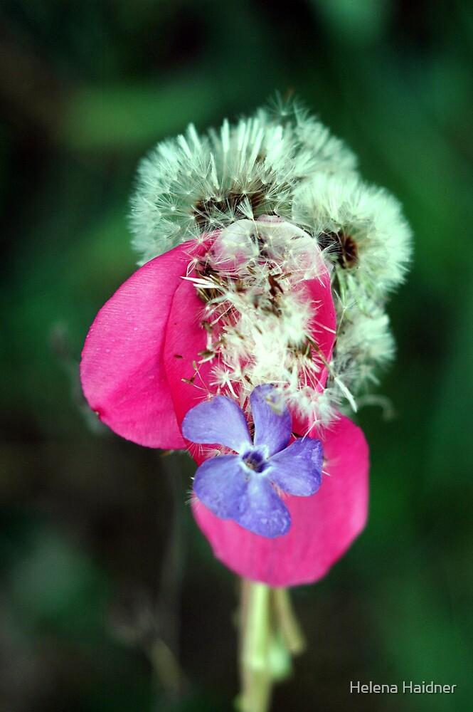 Floral Musings by Helena Haidner