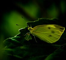 Green by Dave Parrish