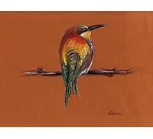 Wild - Original pastel/colored pencil drawing of a colorful wild bird Photographic Print