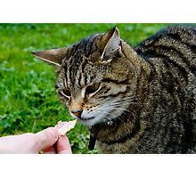 Hungry Cat Photographic Print