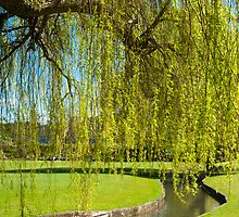 Cry me a River: Weeping Willow by DonDavisUK