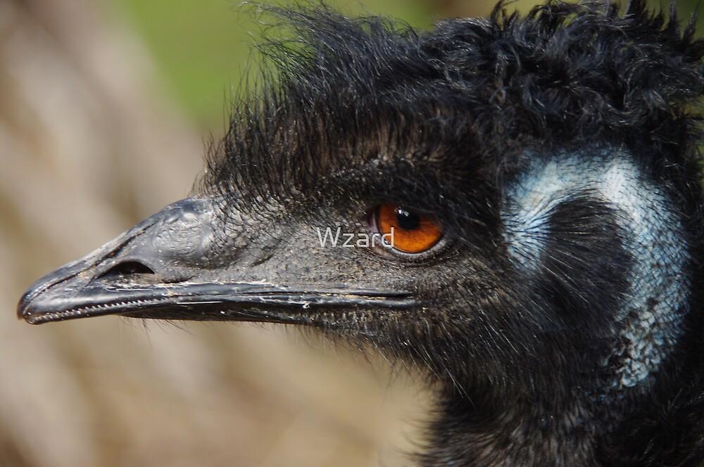Oldman Emu by Wzard