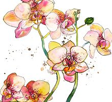 Pink Orchids by marcellawylie