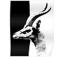 Study in Black & White Poster