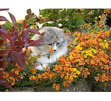 The Chief Garden Inspector Photographic Print
