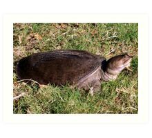 Snapping turtle on land Art Print