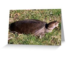 Snapping turtle on land Greeting Card