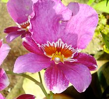 Orchid at Matthaei Botanical Gardens by Roger Wheaton