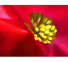 Depth of Color - Red New Guinea Impatiens Photographic Print