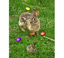 The Original Easter Bunnies Photographic Print