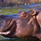 Hippopotamus by JWallace