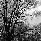 Tree Jungle by Lynn Gedeon