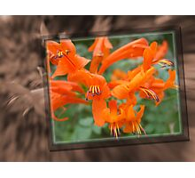 Frame-in-Photo Photographic Print