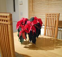Poinsettia Welcome by SunriseRose