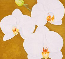White Orchids by Thi Nguyen