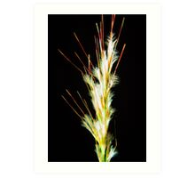 Desert Salt Grass-A-Bloom Art Print