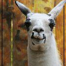 Smiling Llama by Victoria DeMore