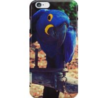 Whatcha say! iPhone Case/Skin