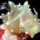Nudibranchs  by MattTworkowski
