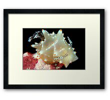 Whats Your Point? Framed Print