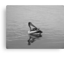 Playful Pelican Canvas Print
