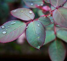 Rose leafs by Luigi De Frenza
