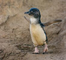 Penguin by smallan