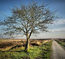 Country Road Fochelloerveen in Spring by ienemien