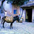 Burro and a School by njordphoto