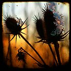 Icy Teasels by gothicolors